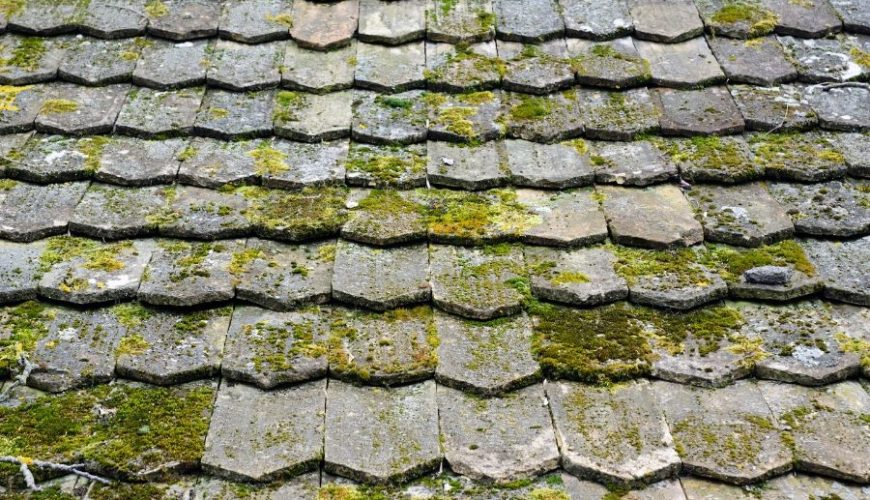 Roof Algae or Moss in Ann Arbor MI