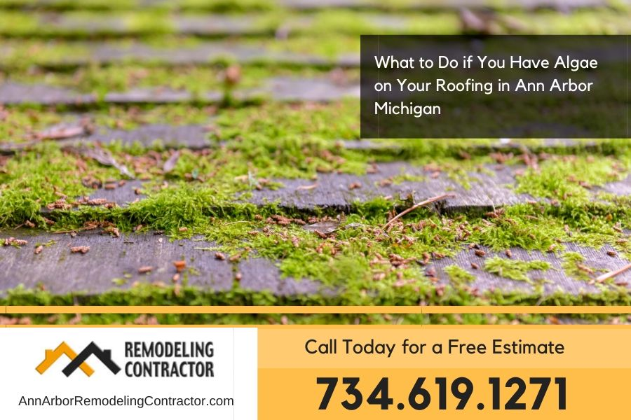 What to Do if You Have Algae on Your Roofing in Ann Arbor Michigan